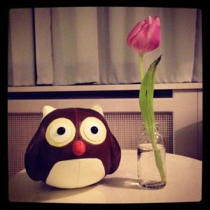 Owl vs Tulip